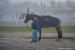 A moment in the fog with Memorial Park Hunters' horse.