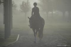Foggy mornings at Pin Oak.